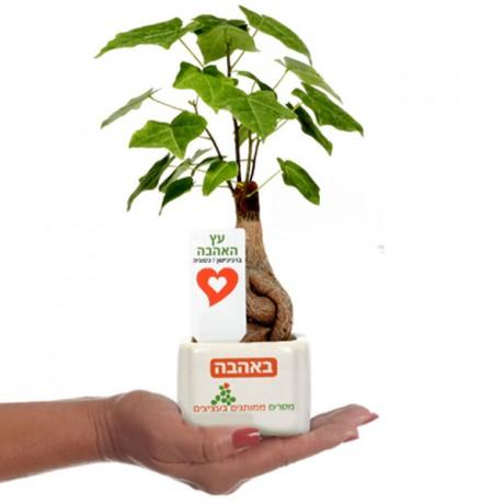 עציץ ממותג בעץ האהבה