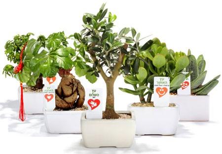 עציצים ממותגים למשרד ולבית