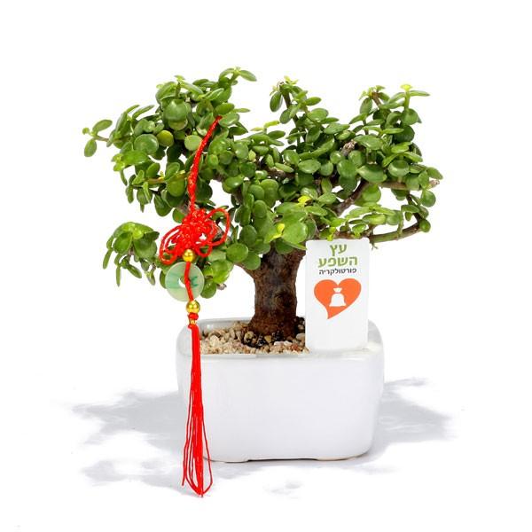 עץ השפע למשרד