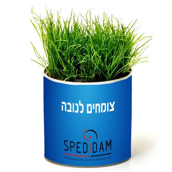 צמח בפחית ראש דשא